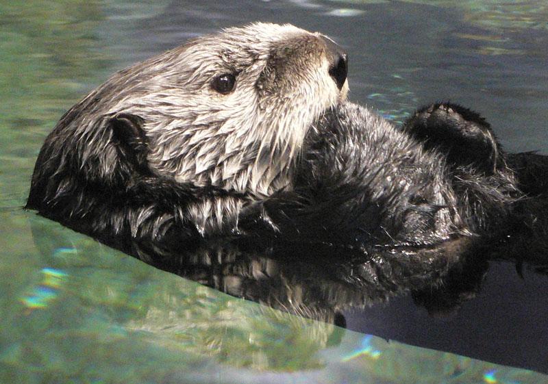 aquarium-otter-full