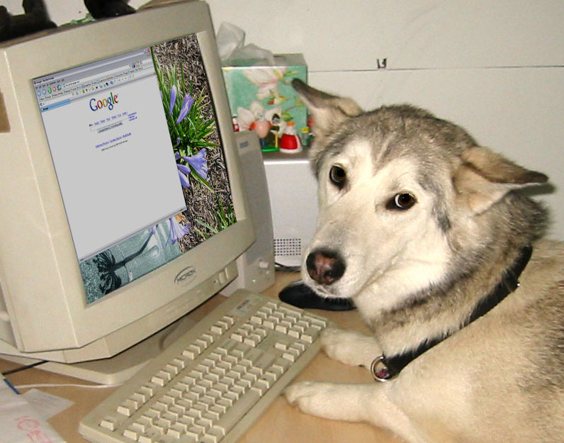 dog-on-internet-full