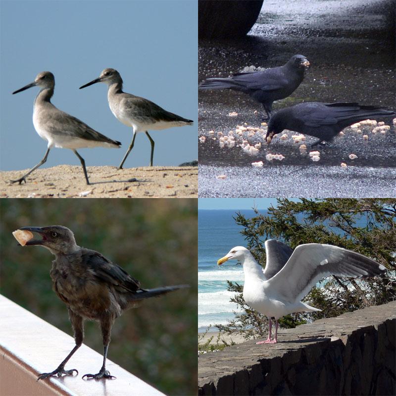 birdsbirdsbirdsbirds-full