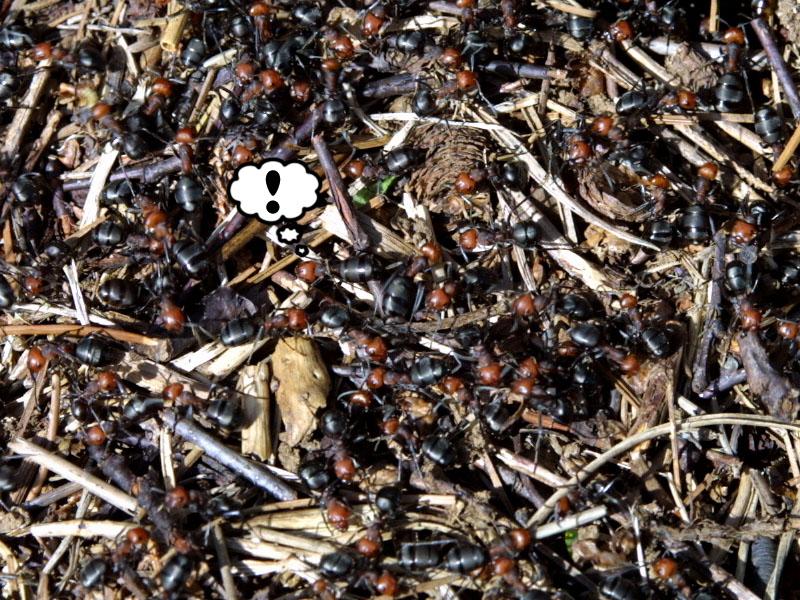 ants-full