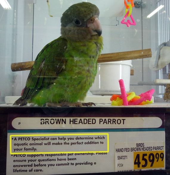 Aquatic... Parrot?