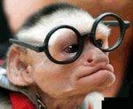 Forecast Monkey
